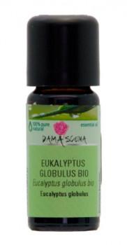 Eukalyptus Globulus-Öl Bio 10 ml