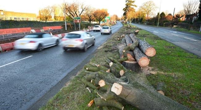 Abholzungen in England: Straßenreisende sollen ungestörten 5G-Empfang haben.