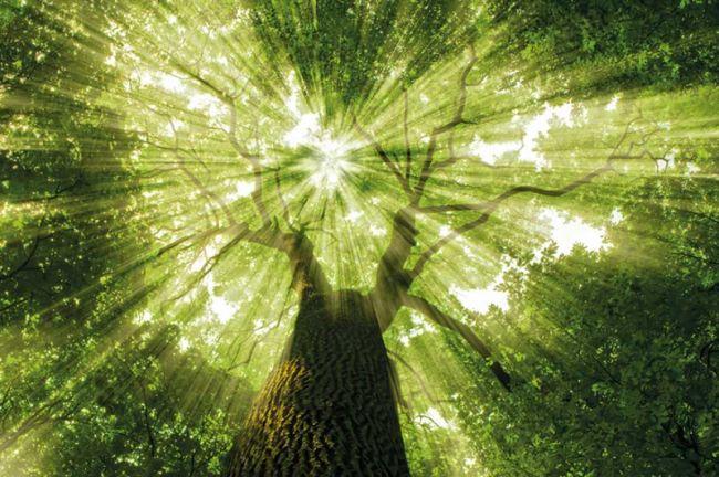 Bäume bauen auf vielfältige Weise ein bewahrendes Kraftfeld auf, das wir noch verstärken helfen können.