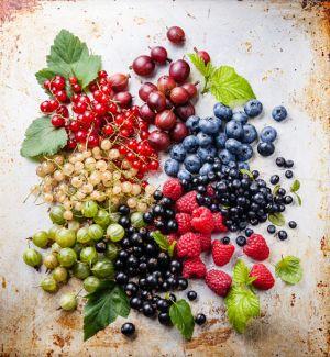 Sommerliche Vitaminbomben, die auch noch köstlich schmecken: (Von oben, Uhrzeigersinn): Rote Stachelbeeren, blaue und schwärzliche Heidelbeeren, Himbeeren, Schwarze Johannisbeeren, grüne Stachelbeeren, Weiße und Rote Johannisbeeren.
